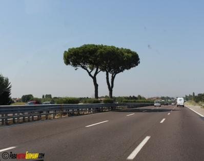 Pinienbäume auf der Autostrada